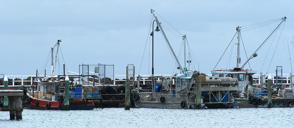 Sea Bounty Portarlington pier